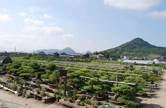 Konishi Shorakuen bonsai garden