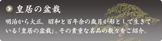 明治から大正、昭和と百年余の歳月が形として生きている「皇居の盆栽」。その貴重な名品の数々をご紹介。