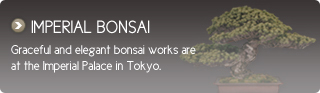 IMPERIAL BONSAI Graceful and elegant bonsai works are at the Imperial Palace in Tokyo.