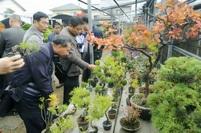 Photogallery: Bonsai garden tours
