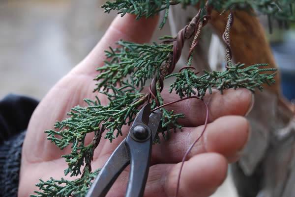 http://bonsai.shikoku-np.co.jp/en/nyumon/25-1.jpg