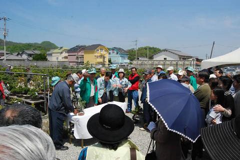 Many visitors in Bonsai Festival in spring.