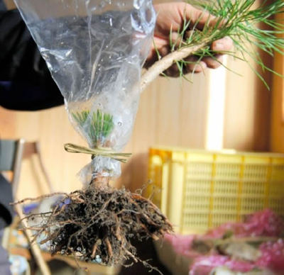 Cover a tree with plastic bag to keep its moisture.