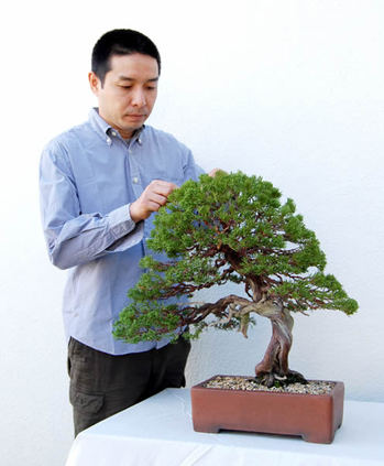A Shinpaku (Chinese juniper) planted in a Nakawatari Chinese pot and Matsuda at Matsuda Seishoen bonsai garden in Takamatsu's Kinashi town