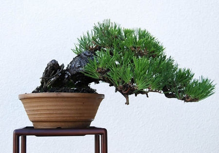 Japanese Deimono of Shigarakiyaki and Hankengai of Japanese black pine