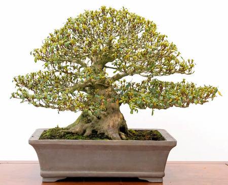 Beautiful trunk like bamboo shoot of Kozan-no-tsuki