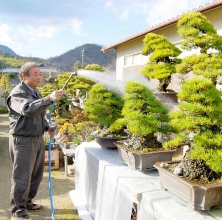 Water it in the daytime if the soil gets dry. (Seijuen bonsai garden in Takamatsu's Kokubunji town)