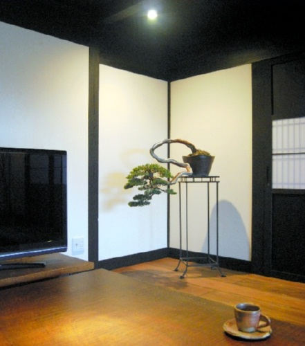 http://bonsai.shikoku-np.co.jp/en/shugi/165-3.jpg