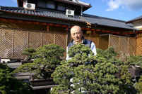 Goyomatsu (Japanese white pine)(1)Attractiveness and Character with elegance of 'Queen'