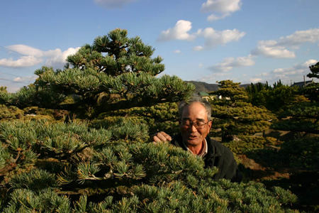 Katsuhiro Kitatani takes care of Goyomatsu (Japanese white pine) at Kitatani Shokkoen bonsai garden in Takamatsu's Kinashi town