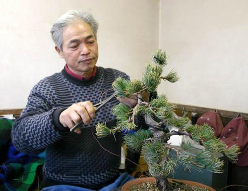 Konishi Yukihiko wires Goyomatsu (Japanese white pine)
