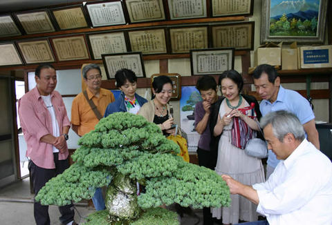 Prof. Senzoku, back row far right, and his companies watching Furuhatori (cutting old needles) of Goyomatsu (Japanese white pine)