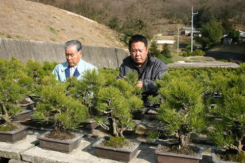 Ayada Tadashi and Tadahito taking care of Yumenishiki in Ryoshoen Bonsai Garden in Takamatsu's Kokubunji town