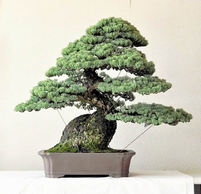 Masterpieces of Kyoshin-kai: Special trees of artists have own attractiveness