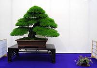 Sekikazari (decorating seat or area for bonsai display) Great ideas captivate fanciers