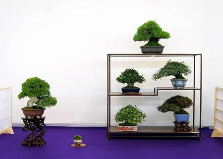 Shohin given the Award of Chief of Agricultural Production Bureau of Ministry of Agriculture, Forestry and Fisheries