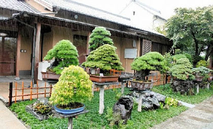 Area for bonsai masterpices