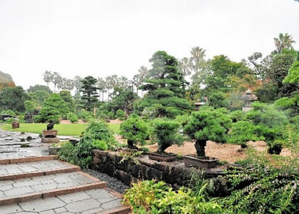 The vast grounds of Takasago-an Bonsai Garden in Niihama in Ehime prefecture