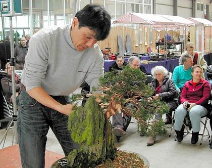 Hiramatsu's demonstration of adaptation of Chinese juniper