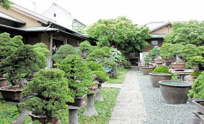 Takasago-an Bonsai Garden is attracted attention from all over the world.