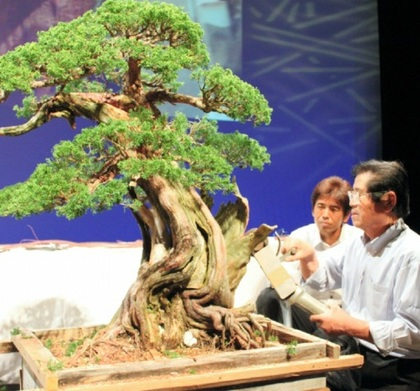 Some bonsai masters like Masahiko Kimura (right) show their great technique in demonstrations