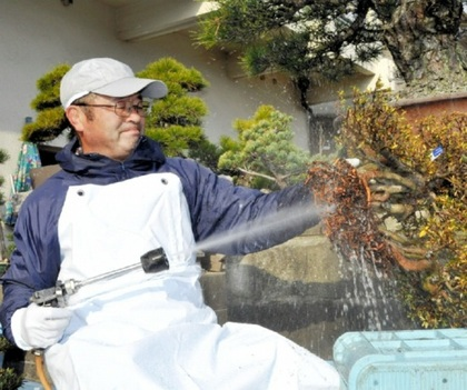 Yamaji, washing the roots of Azalea at Takamatsu's Kokubunji town