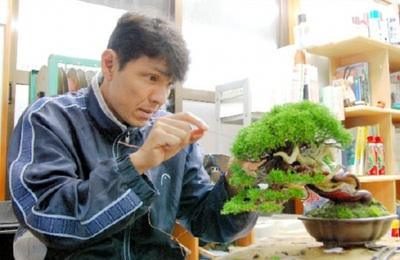 Hiramatsu, wiring a bonsai at Shunshoen bonsai garden in Takamatsu's Kokubunji town