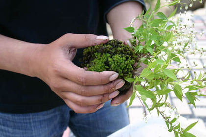 He is putting the moss to cover the soil at Sakuya Kobo in Takamatsu's Kokubunji town.