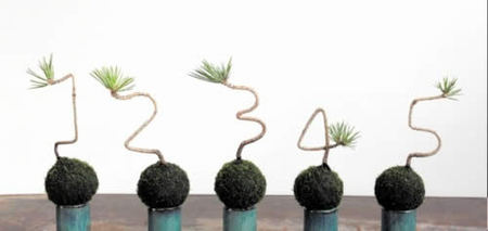 Kokedama works express the figures from 1 to 5.