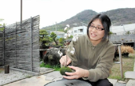 Michiko Hanazawa is making a Kokedama of cherry in Hanazawa Myoshunen bonsai garden in Takamatsu's Kinashi town.