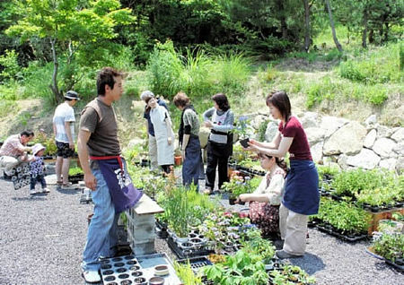 The enjoyable work to choose a tree for Kokedama, Sakuya Kobo in Takamatsu's Kokubunji town