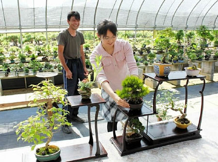 Hiramatsu watches Kinashi making her display at Shunshoen bonsai garden in Takamatsu's Kokubunji town.