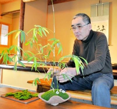 Hanazawa taking care of Kinmeichiku at Hanazawa Myoshunen bonsai garden in Takamatsu's Kinashi town