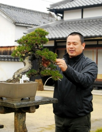 Nakanishi taking care of Kuromatsu (Japanese black pine) Kotobuki at Nakanishi Chinshoen bonsai garden in Takamatsu's Kinashi town