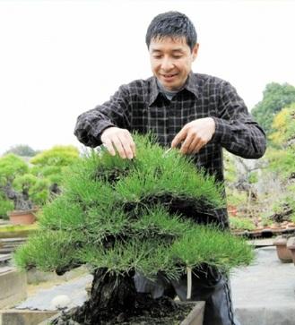 Matsuda arranging his tree at Matsuda Seishoen Bonsai garden in Takamatsu's Kinashi town