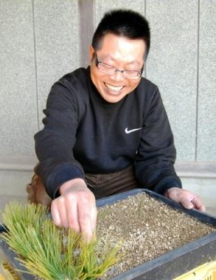 Omatsu putting the scions of Nishikimatsu in Omatsu Kinshoen bonsai garden in Kagawa's Ayagawa town