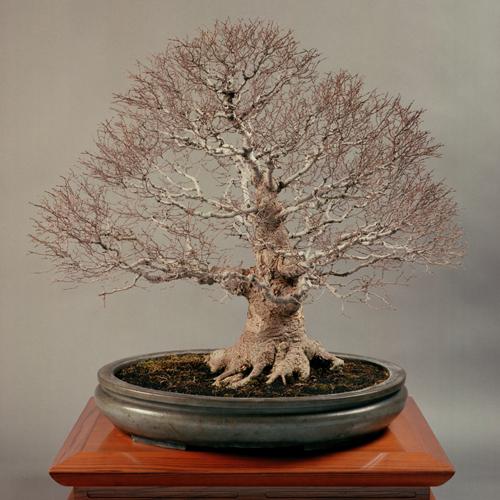 「ケヤキ」均窯楕円鉢