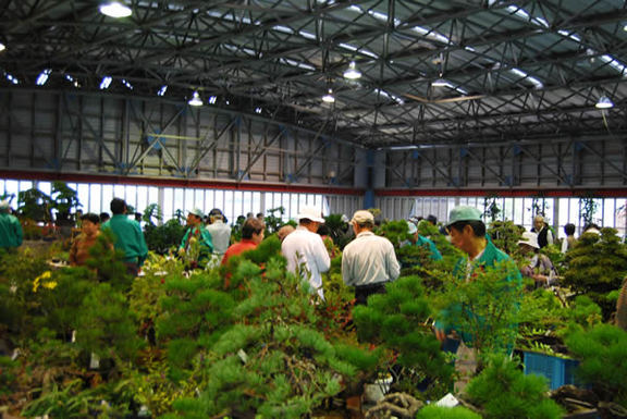 Bonsai lovers look for items at the Green Festa Kokubunji in Takamatsu's Kokubunji area.