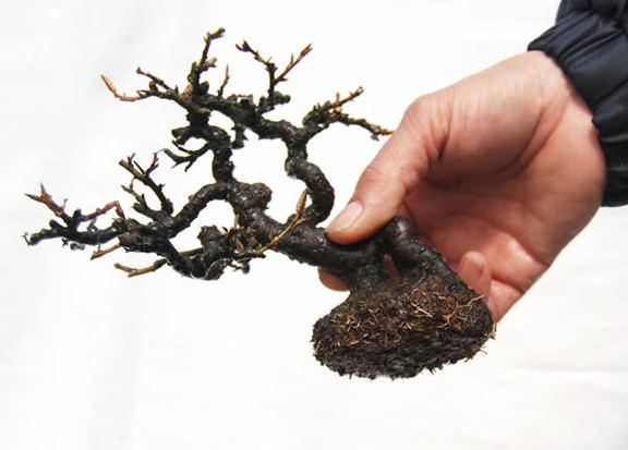 葉と根を切り込んだ姿