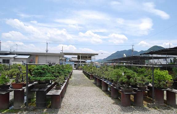 広々とした展示のJA国分寺盆栽センター