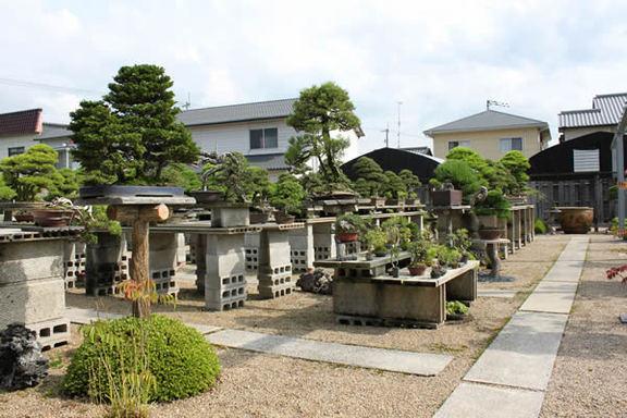 広々とした棚場=香川県高松市鬼無町、中西珍松園