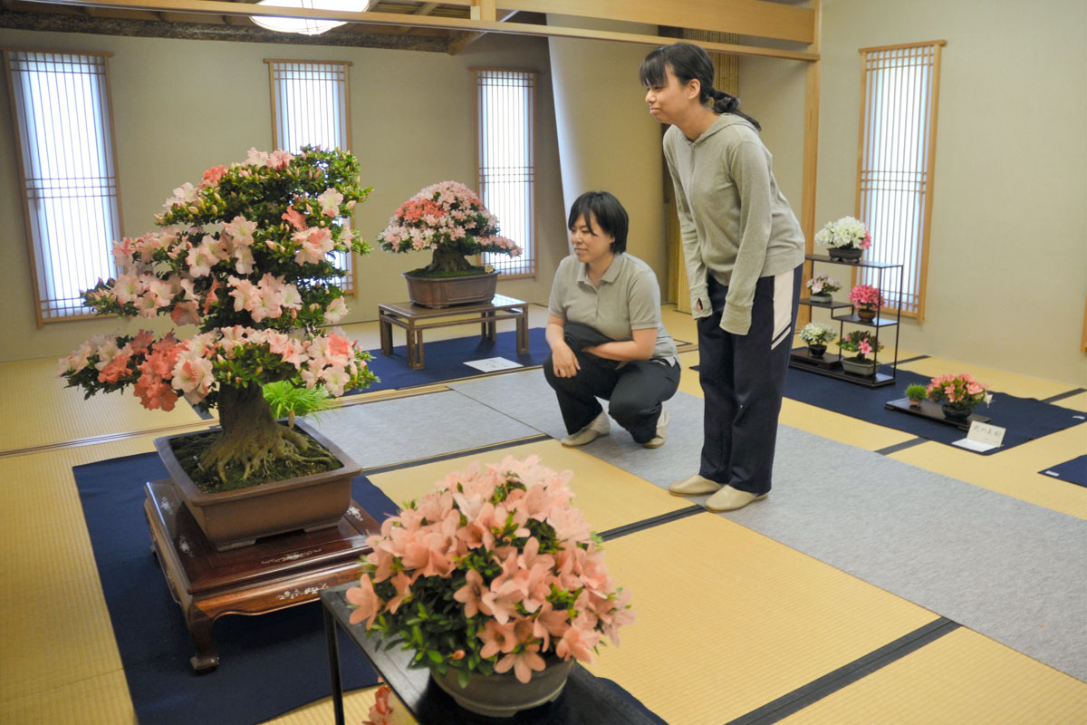 http://bonsai.shikoku-np.co.jp/other/IP180525TAN000017000_02.jpg