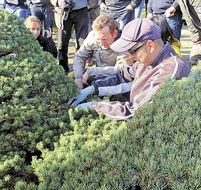 「盆栽の郷」海外へ発信 高松市、3月に初のツアー
