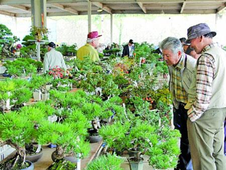 盆栽を熱心に品定めする「きなし盆栽植木まつり」の来場者=高松市鬼無町