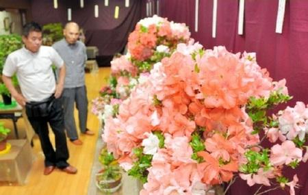愛好家が育てたサツキ盆栽が並ぶ作品展=観音寺市植田町、常磐総合コミュニティセンター