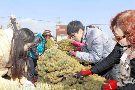 五葉松の枝の剪定作業に挑戦する参加者=高松市鬼無町