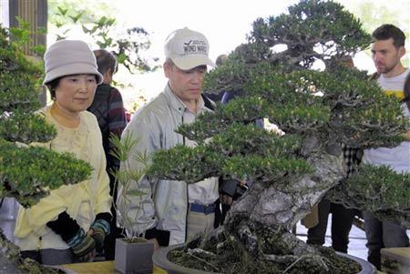 樹齢約200年といわれる黒松を観賞する来場者=高松市鬼無町、県鬼無植木盆栽センター