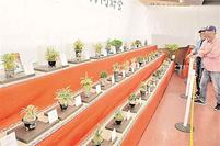 自慢の古典園芸植物一堂 琴平 愛好家らが展示会