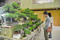 盆栽の魅力をPR 高松、鬼無・国分寺でフェス