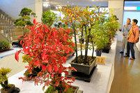 盆栽や鉢植え一堂 秋の色合い味わう まんのうで山野草展
